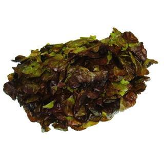 "#Salat der Woche: "" Kopfsalat """
