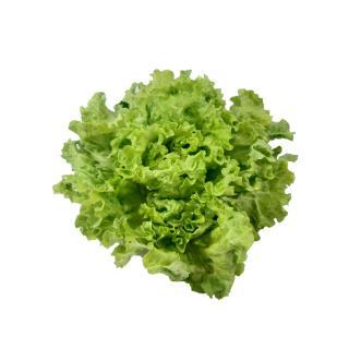 Salat Batavia regional