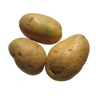 """Kartoffel mehlig """" Gunda"""""""