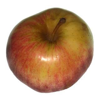 "Apfel  "" Jonagold "" Bodensee"