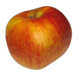 "Apfel  "" Santana"" für Allergiker"