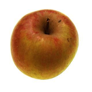 """Apfel """"Boskoop"""" regio"""