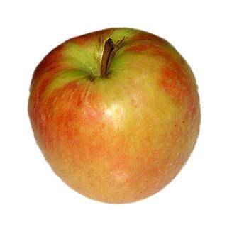 Apfel mit kleinen Fehlern versch. Sorten
