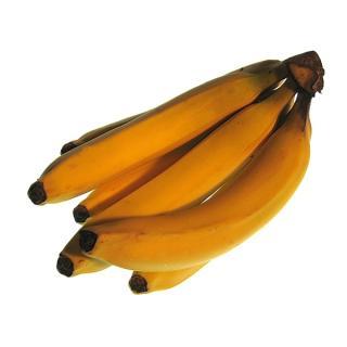 Banane Apfelbanane superaromatisch  Fairtrade Uganda