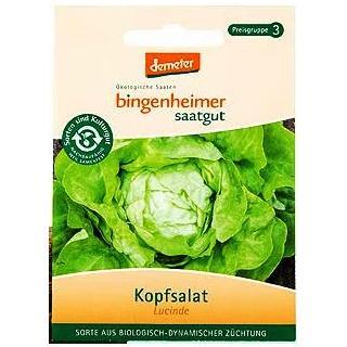 Saatgut Salat Kopf Lucinde