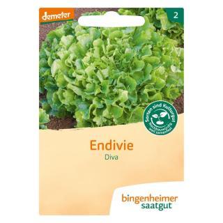 Saatgut Salat Endivie Diva